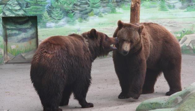 Закохані ведмеді: в Одеському зоопарку назвали пари року