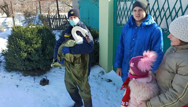 На Днепропетровщине в заброшенном карьере спасли лебедя