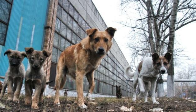 «П'ять свобод» для чотирилапих: зоозахисники закликають Раду не вертати тварин на вулиці
