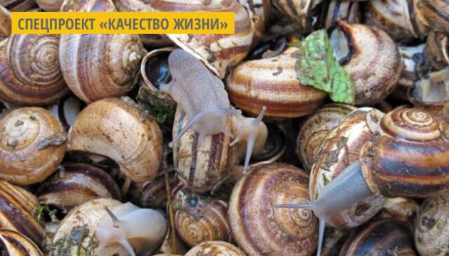 На Николаевщине начали изготавливать косметику из слизи улиток
