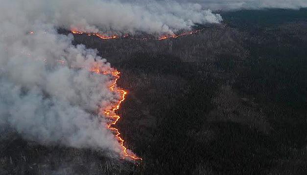 Весенние пожары в зоне отчуждения «разнесли» радиацию на значительные расстояния