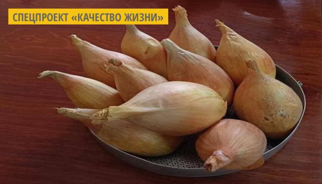 На Черниговщине селекционеры вывели сорт лука, который сохраняет свои качества до нового урожая