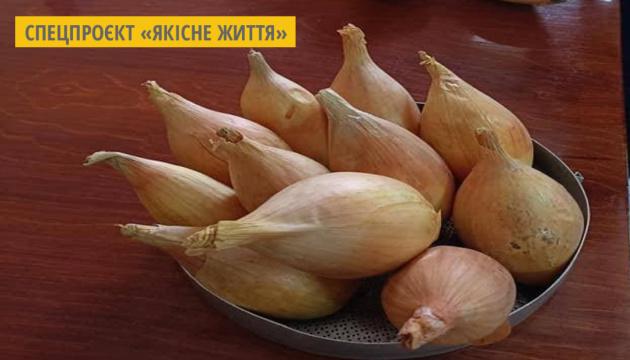 На Чернігівщині селекціонери вивели сорт цибулі, яка зберігає свої якості до нового врожаю