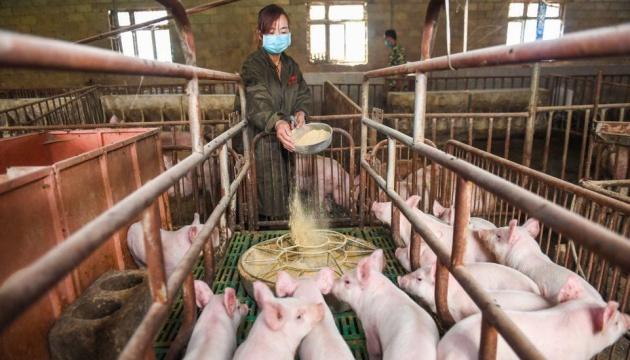 Huawei планує рятувати бізнес розведенням свиней і видобутком вугілля