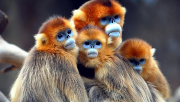 Мавпячі мордочки: Китай розробляє нову технологію розпізнавання обличчя