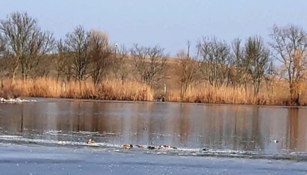 Гибель птиц в Аскании: экспертизу проведут в течение недели