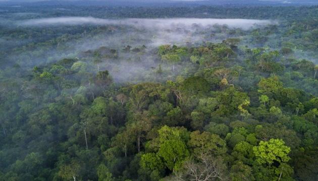 Ділянки тропічних лісів Амазонки незаконно продають через Facebook
