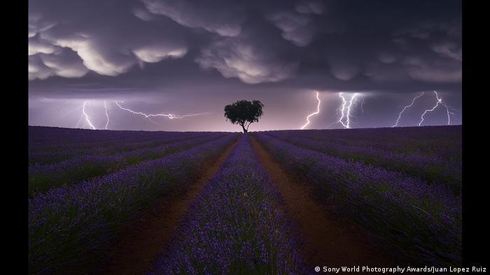 Эта фотография Juan López Ruiz (Испания) в пояснениях не нуждается. Разве что, как уточняет автор фотографии, молнии бьют в поле лаванды. Категория