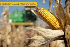 На Днепропетровщине построят завод по глубокой переработке кукурузы