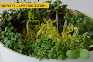 Ивано-Франковский фермер предлагает начать весну с 50 граммов микрозелени