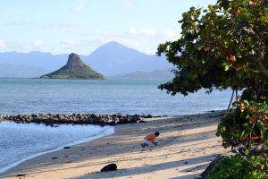 На Гаваях хочуть штрафувати необачних туристів
