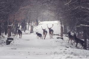 У лісах Житомирщини з'явилися лані