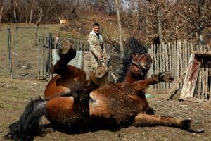 Голограмма князя, картина-рекордсменка и лошадиные забавы