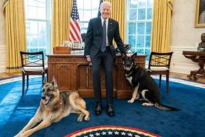Собак Байдена вивезли з Білого дому - вівчарка вкусила охоронця
