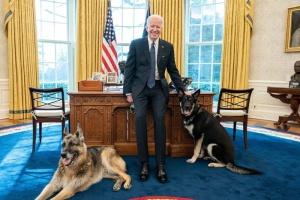 Собак Байдена вывезли из Белого дома - овчарка укусила охранника