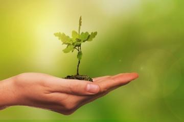 ウクライナ慈善団体、20日に世界100か国で100万本植樹プロジェクト実施