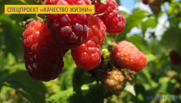 Полезные свойства малины и смородины