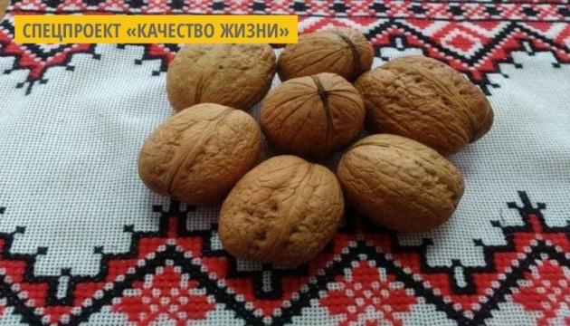 Гетман, Легинь, Красавец и Сокровище: ученые Буковины вывели новые сорта грецкого ореха