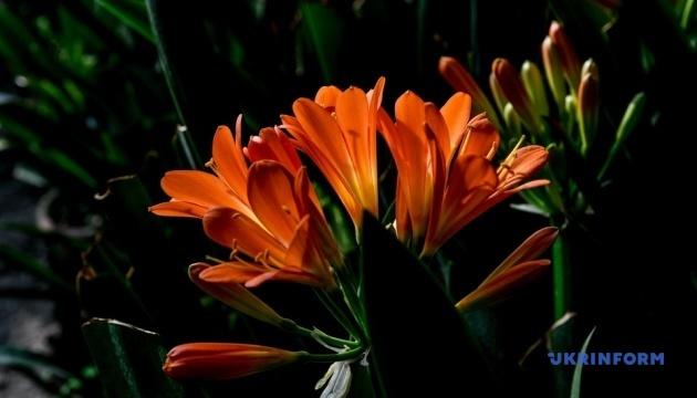 У Запорізькому ботанічному саду розцвіли гіацинти та клівії