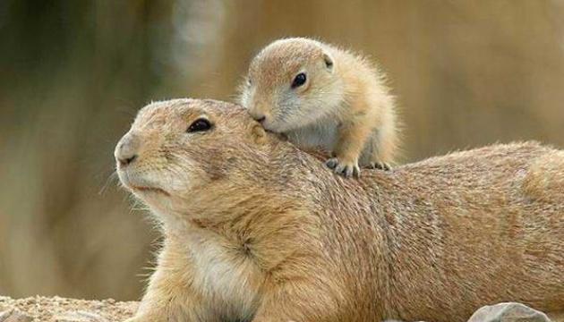 До Червоної книги України потрапив 171 новий вид тварин