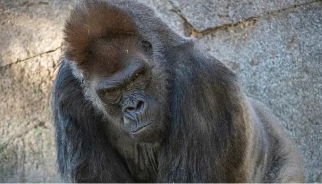 В США сделали прививки от коронавируса обезьянам