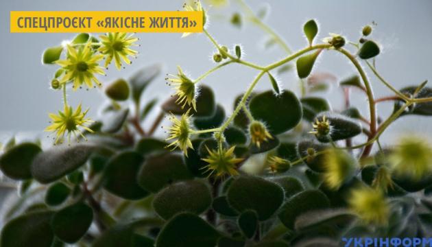 У Миколаєві випускають натуральні есенції з рослин власного виробництва
