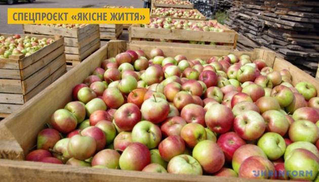 Садівниче господарство на Полтавщині переробляє яблука на соки прямого віджиму та джеми