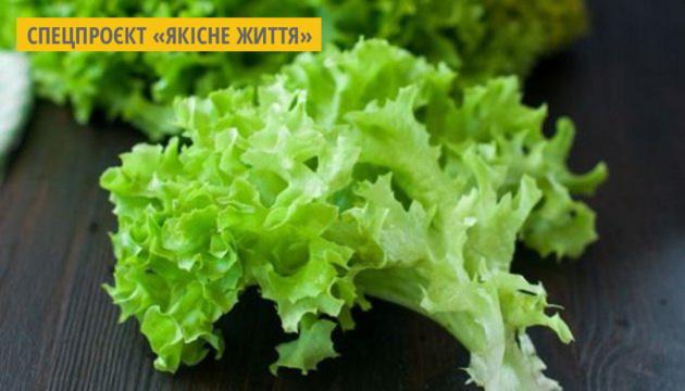 На Київщині фермери вирощують салат і руколу без ґрунту