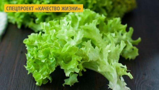 На Киевщине фермеры выращивают салат и руколу без почвы