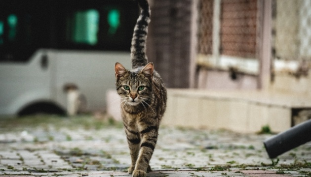 У Херсоні котів визнали частиною екосистеми