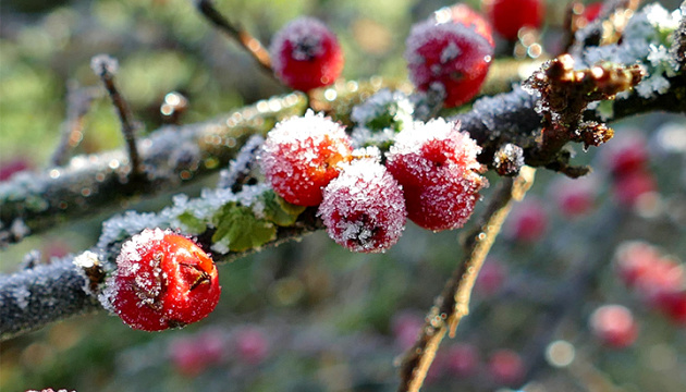 В Україну йдуть дощі та нічні морози