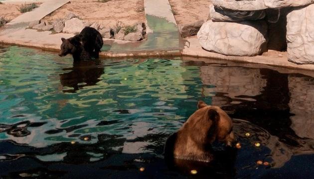 У вінницькому зоопарку бура ведмедиця народила малят
