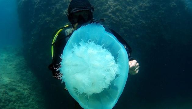 Возле Анталии появились гигантские медузы - пол метра в диаметре