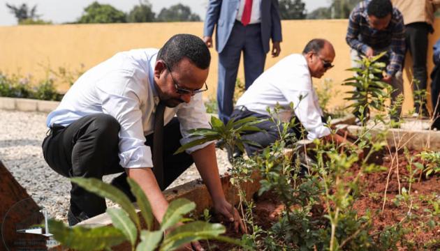 Ефіопія цьогоріч висадить шість мільярдів дерев