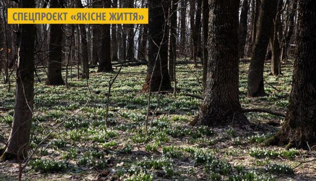 На Черкащині студенти та активісти охороняють місця квітування підсніжників