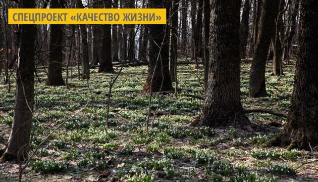 В Черкасской области студенты и активисты охраняют места цветения подснежников