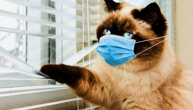Кошки болеют коронавирусом. Но не таким, как у людей