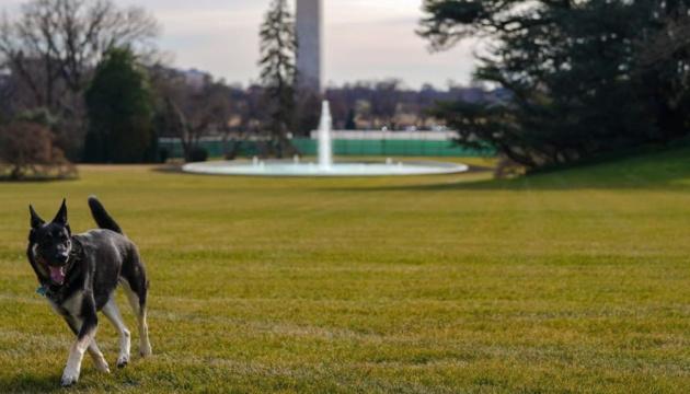 Собака Байденів знову вкусив людину в Білому домі