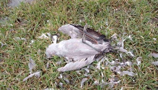 Тут Армагеддон: директор «Асканії-Нової» прокоментував загибель птахів