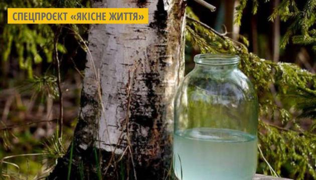 Корисні властивості березового соку