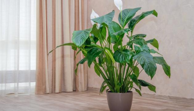 Зеленые сожители: 10 комнатных растений, о пользе и вреде которых стоит знать