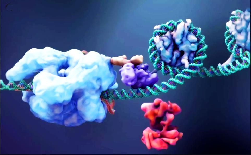 перша в світі 3D-модель редактора підстав - модифікованої системи CRISPR-Cas9