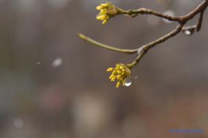 В Украину снова идет похолодание, местами - дождь с мокрым снегом