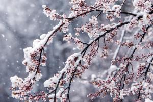 Строгий карантин, апрельский снег и поросячья радость