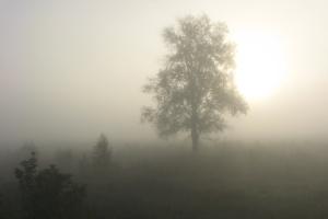 Густий туман завтра накриє майже всю Україну