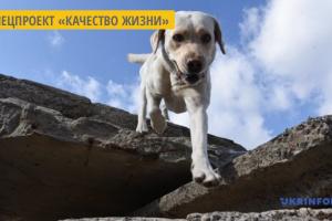 В Тернополе для детей проводят сеансы канистерапии - лечение с участием собак