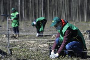 Акція «1 мільйон дерев за 1 добу у 100 країнах світу» пройшла у Пущі-Водиці