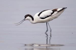 На Тилигульском лимане строят искусственные островки для гнездования редких птиц