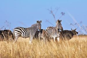 Природоохоронні об'єкти Херсонщини готуються до літнього туристичного сезону