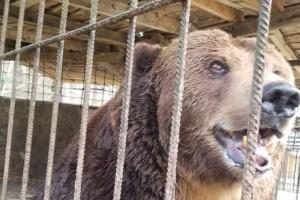 До центру реабілітації на Закарпатті привезли ведмедя Юру з Косова